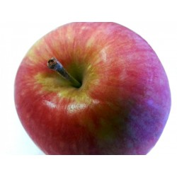 Cagette pomme galaxy rouge...