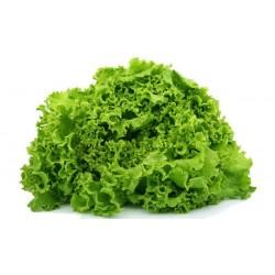 Salade batavia blonde fr