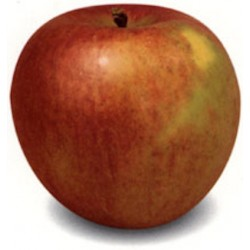 Cagette pomme breaburn 13kg...