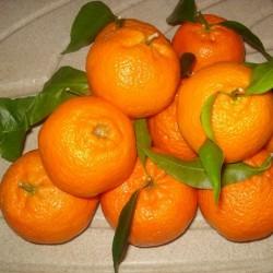 Mandarine ciaculli (pépins)...