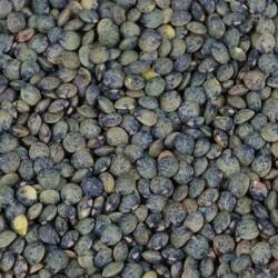 Lentilles vertes 250g