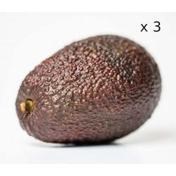 Avocat Hass x3 cal 26/28/30