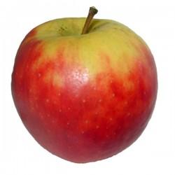 Pomme elstar 1kg cal 115+