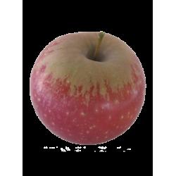 Pomme ariane 2,5kg cal 115+